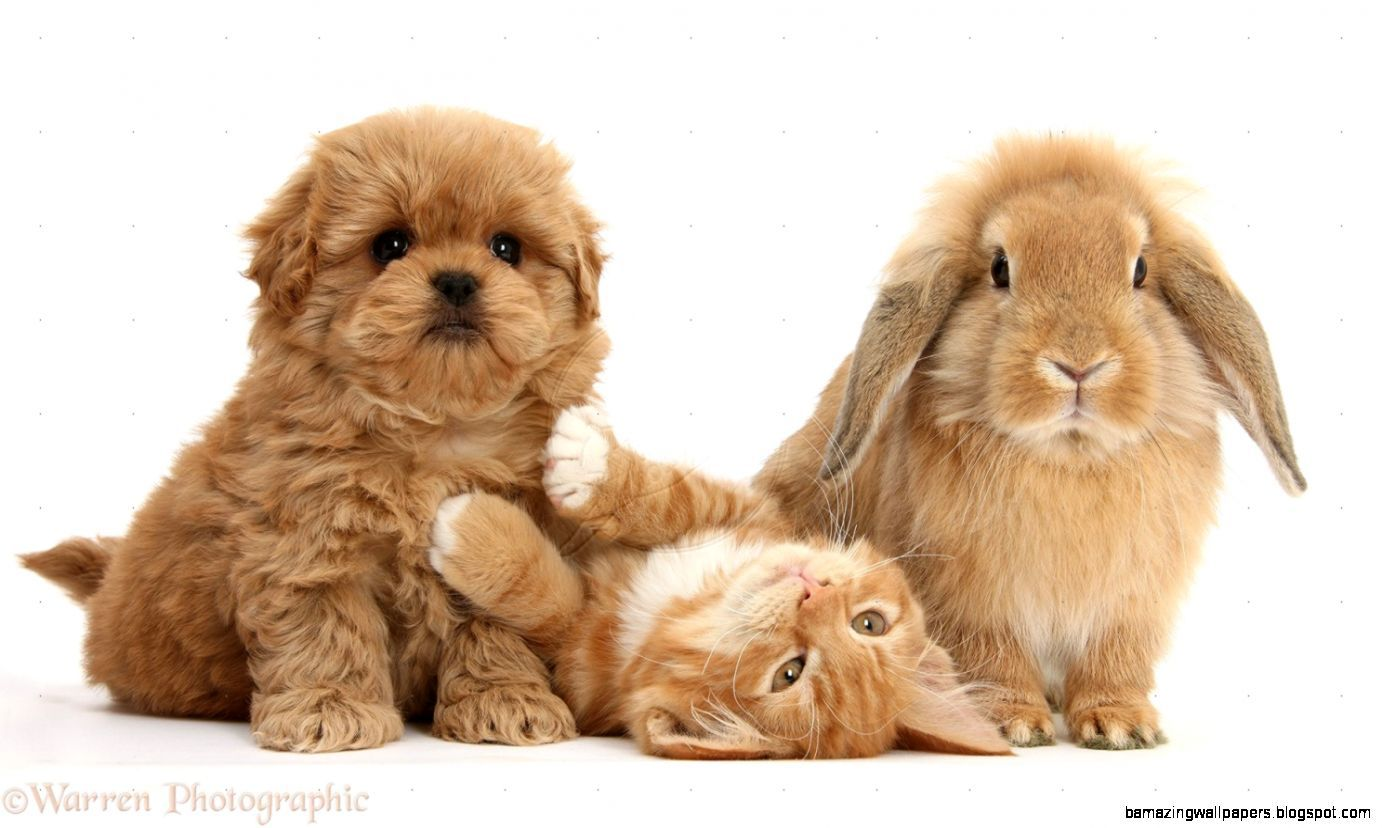 Cute Kittens And Puppies And Bunnies Cute Puppies And Kittens Kittens And Puppies Super Cute Kittens