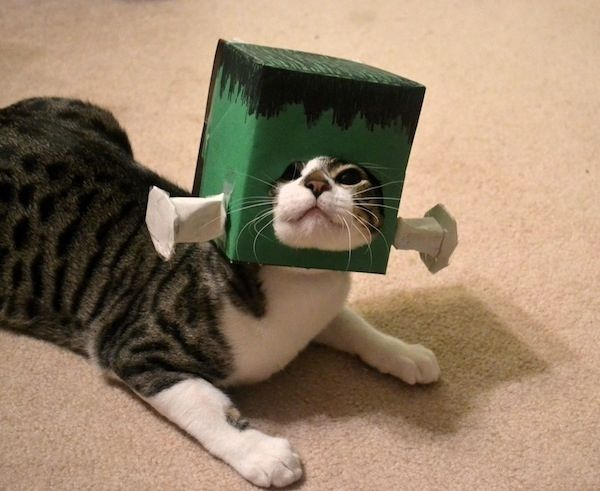 The 30 Most Terrifyingly Adorable Pet Halloween Costumes in - cute cat halloween costume ideas