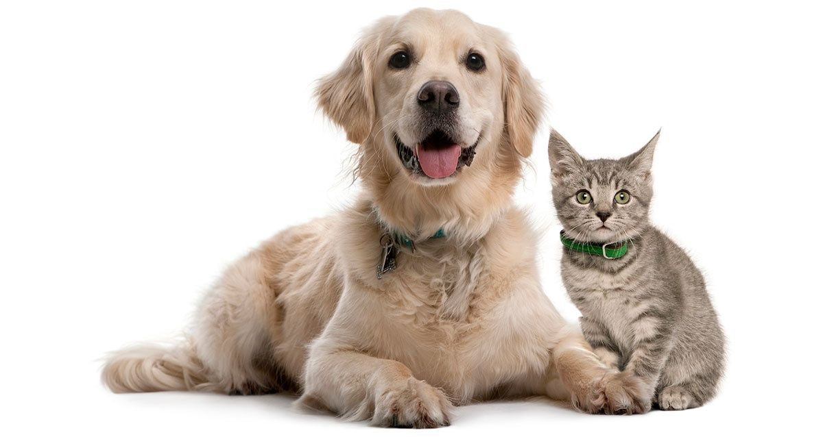 Pet Insurance For Dogs Easy Quotes, Best Rates Available