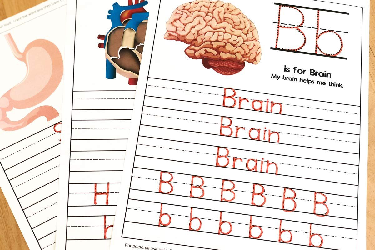 Human Body Worksheets For Kindergarten & Up Kindergarten