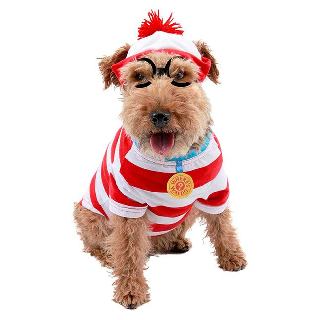 62 of the Best Dog Costumes for Halloween via Brit + Co Whereu0027s Waldo costume target  sc 1 st  Pinterest & 62 of the Best Halloween Dog Costumes | Costumes Dog and Dog halloween