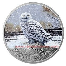 CANADA 2016 MONEDA PLATA 20 DOLARES BUHO NEVADO A COLOR CANADA 2016 SILVER COIN $ 20 SNOWY OWL TO COLOR Tienda: http://bit.ly/1MZ6t3H Blog: http://bit.ly/1kY8HJW