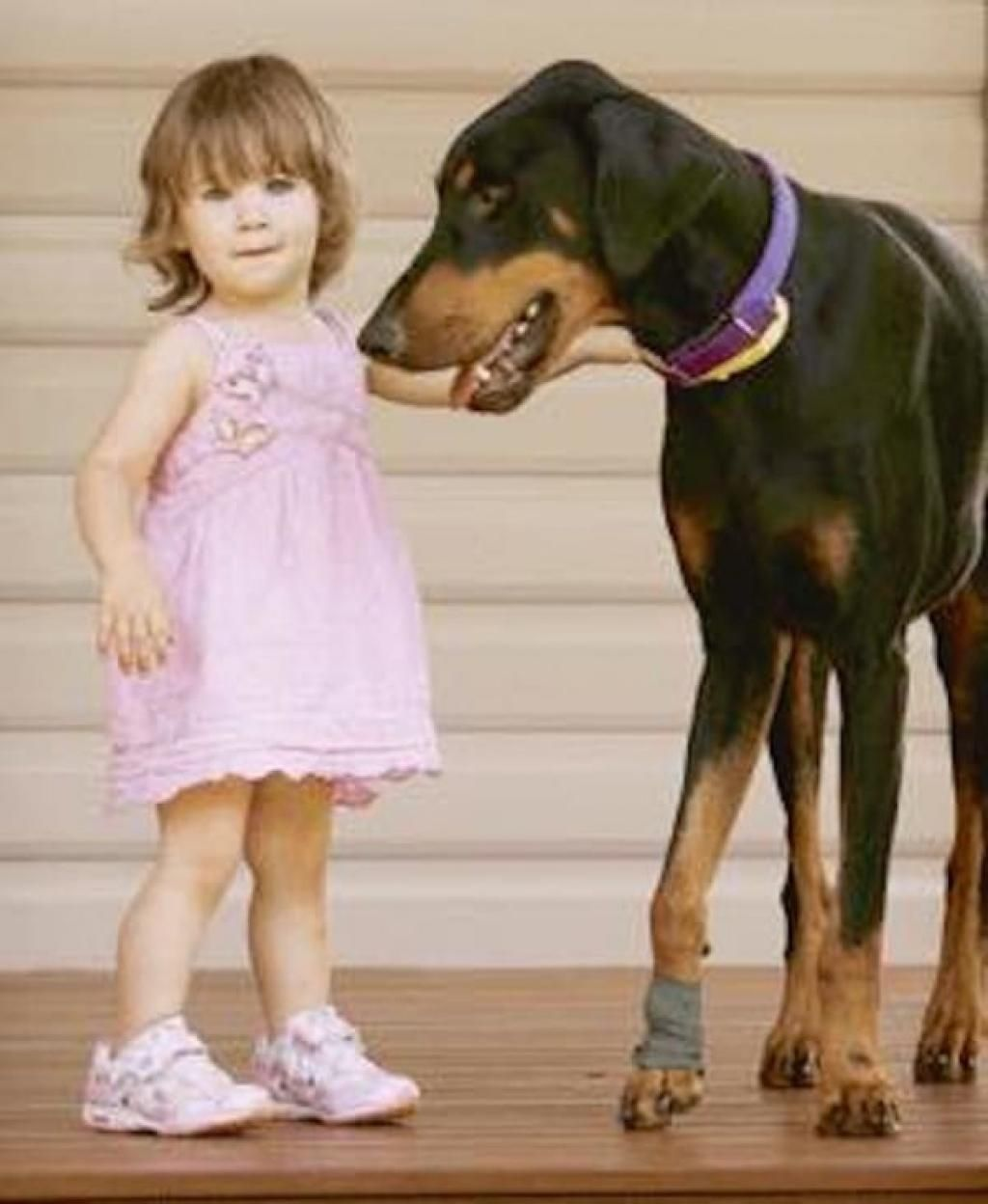 This Dog Threw A Child Across The Yard But When The Mom Saw Why She Could Not Believe Her Eyes Doberman Doberman Rescue Doberman Pinscher