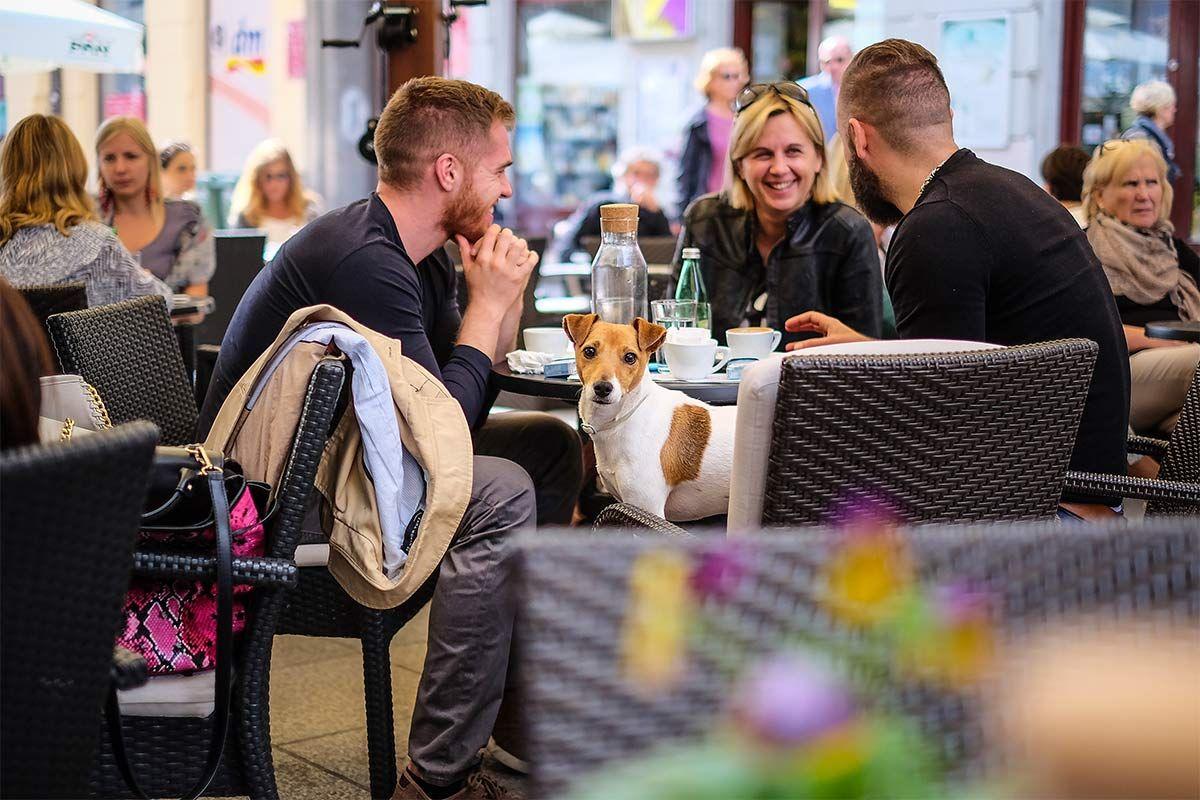 Croatian Cafe Culture 25 Sacred And Secret Meanings Croatia Zagreb Croatian
