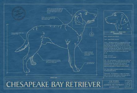 Animal blueprint company chesapeake bay retriever dog print dog animal blueprint company chesapeake bay retriever dog print malvernweather Gallery