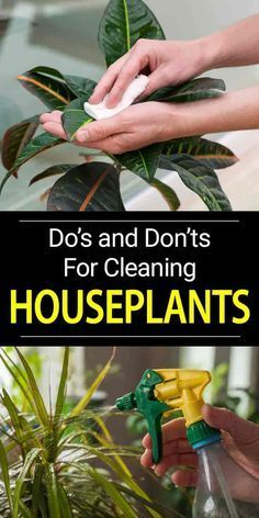 How To Clean Houseplant Leaves | PlantCareToday