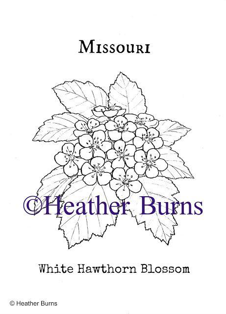 Missouri State Flower, White Hawthorn Blossom   State Flower ...