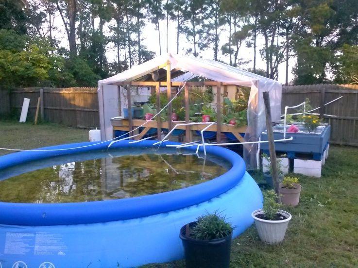 Aquaponics easy aquaponic gardening sylvia bernstein pdf for Garden pool doomsday preppers