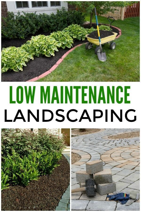 Low Maintenance Landscaping Ideas In 2020 With Images Backyard