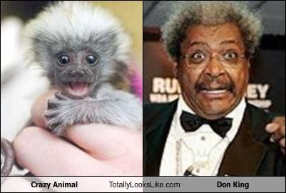 Will the real Don King please stand up?