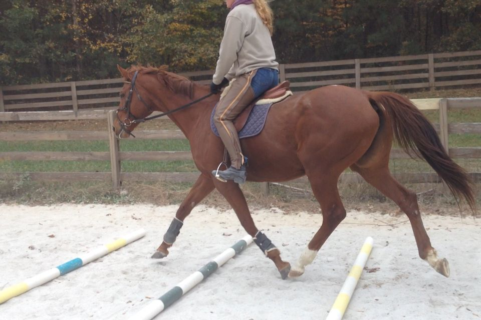 Fast call tb mare for sale in conyers ga loves having