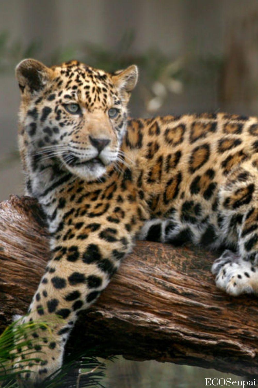 Animals Photo Amazing And Beautiful Scenery Awesome Photography