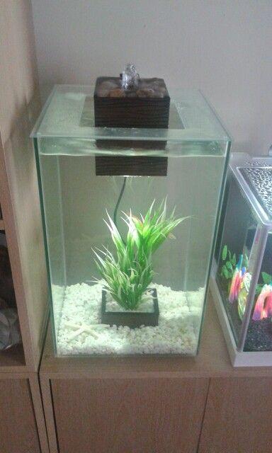 Fluval Chi Nano Aquarium Fantail Goldfish Fish Tank