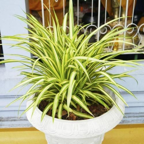 plante interieur qui pousse vite