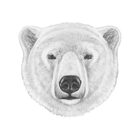 Portrait Of Polar Bear Hand Drawn Illustrationby
