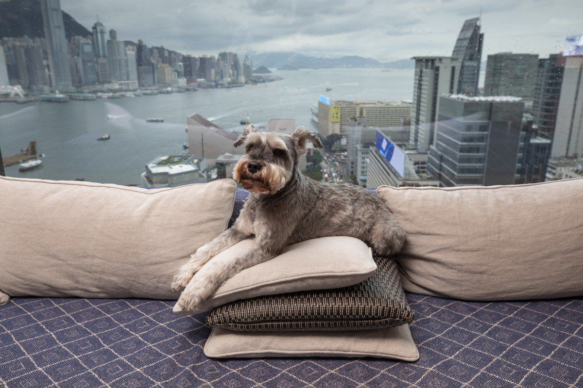 Pawfect Stay Pet Pampering Hits New Heights At Luxury Hotels Luxury Pet Pet Friendly Hotels Dog Travel