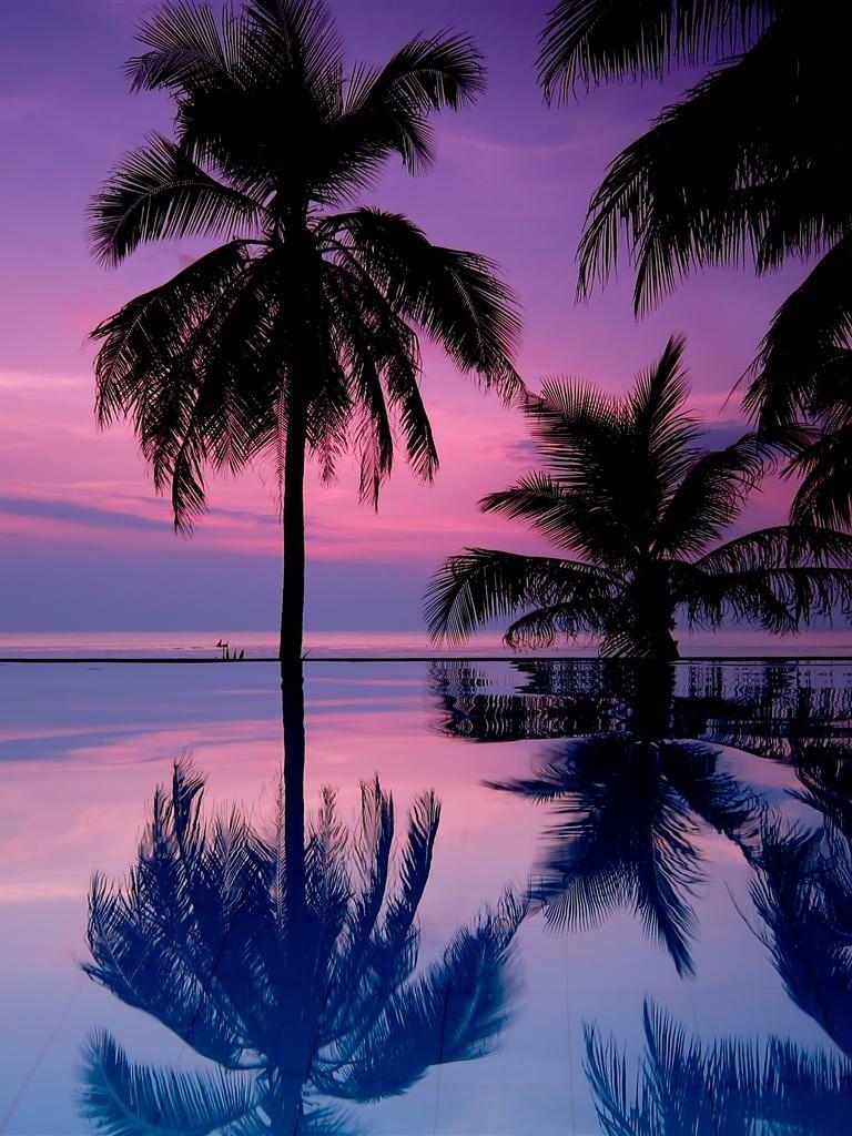 Palm trees Sunset wallpaper, Palm trees wallpaper, Phone
