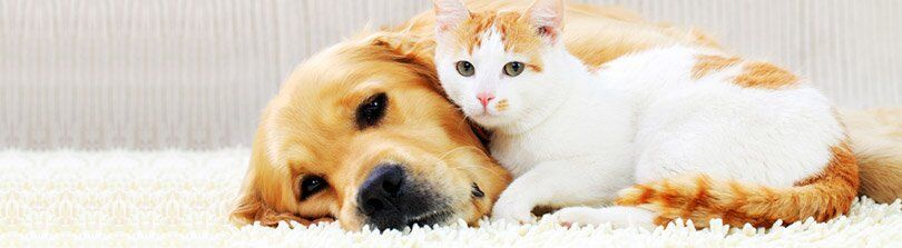 What Does Pet Insurance Cover And Why Do You Need It Find The Answers Here Https Www Petco Com Content Petco Pe Service Animal Pets Pet Insurance