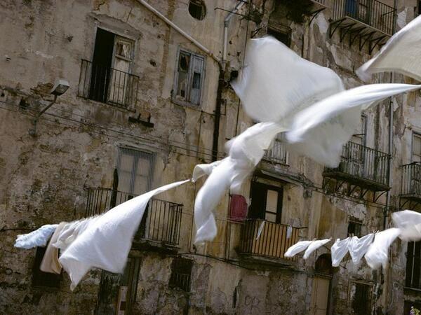 Palerme -(Sicily)  Waallard