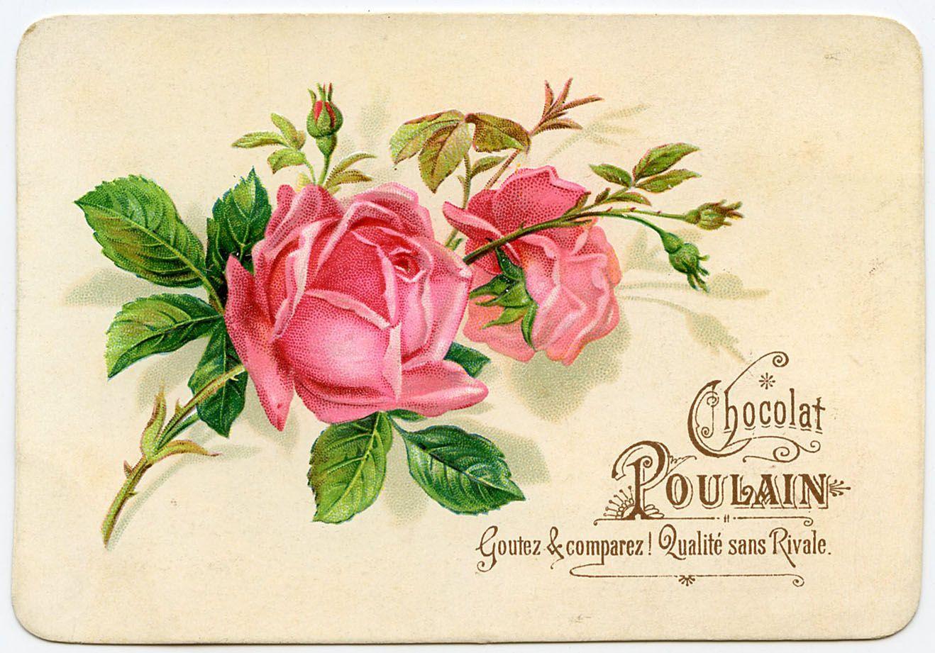 Прикольные стену, винтаж открытки розы