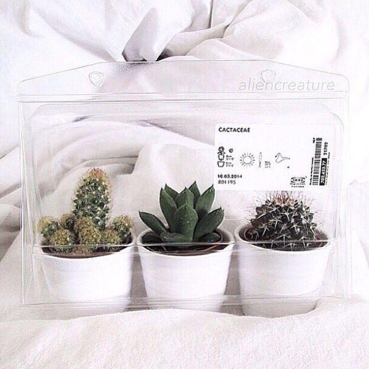 Cacti and Succulents Plants, Planting flowers, Plants