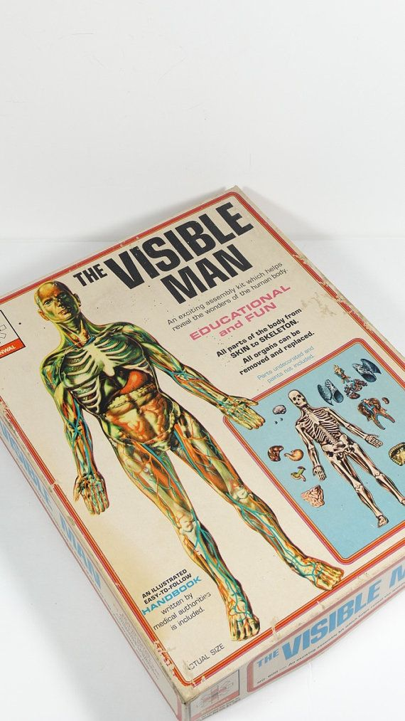The Visible Man 1959 Educational Toy by OldThingsMakeMusic   Anatomy ...