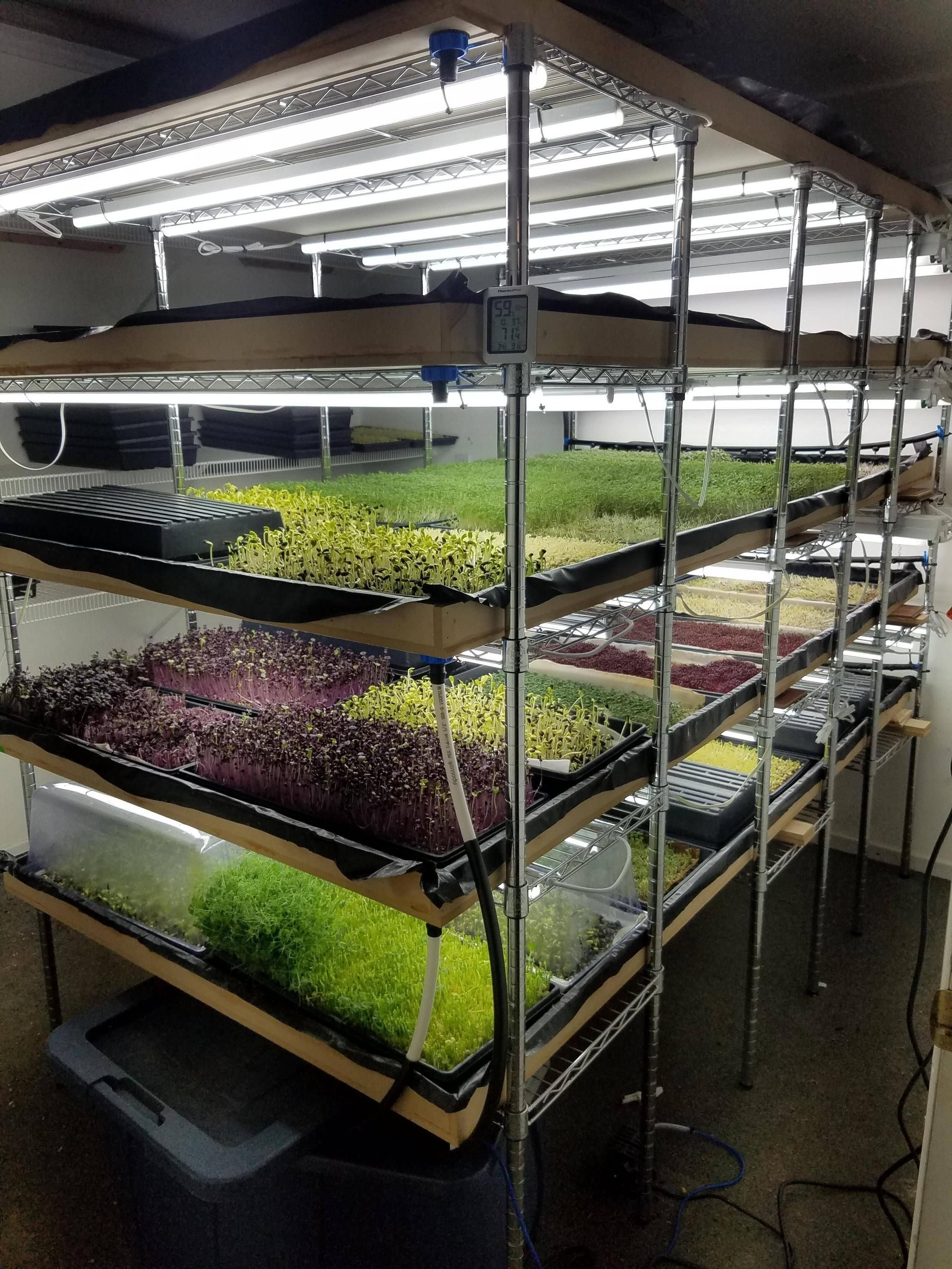 Microgreens! Our new grow room setup is working out swell