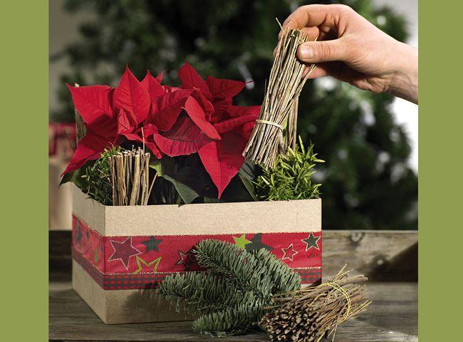 Faire soi-même : composition de Noël avec des poinsettias - Etape 3