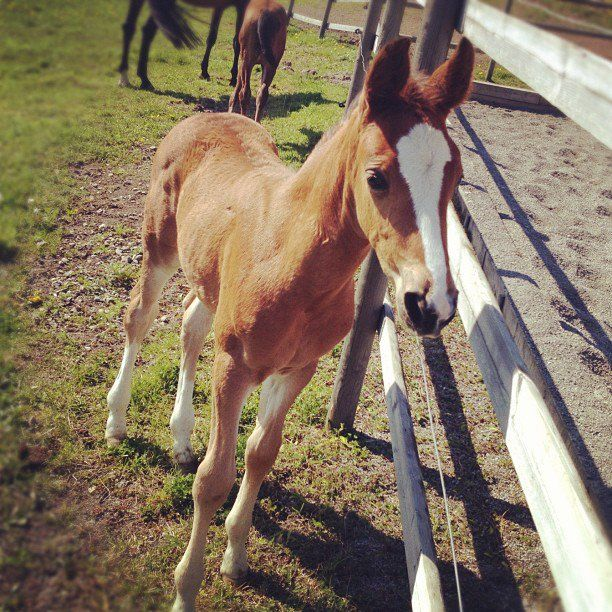 Baby horse > any other baby