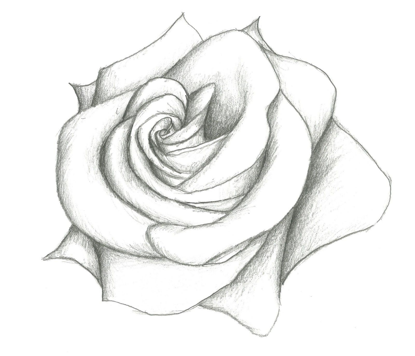 Pin drawn flower simple pencil art 1