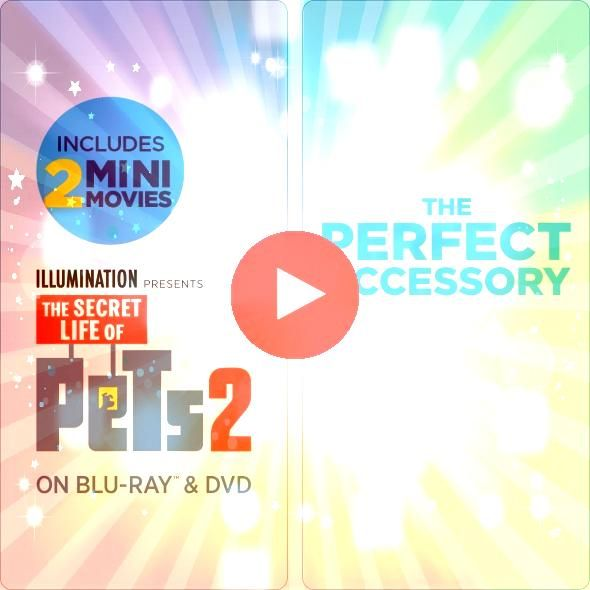 SECRET LIFE OF PETS 2 is the perfect movie for the whole family Get the Exclusive Limited Edition Gift set only at WalmartTHE SECRET LIFE OF PETS 2 is the perfect movie f...