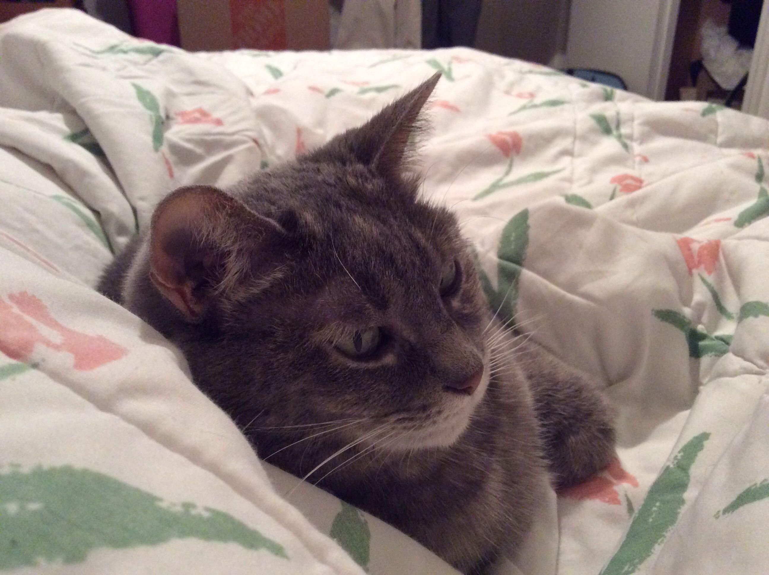 Window bed for cats  jasmine  a kitties kitties n more kitties love love love n some