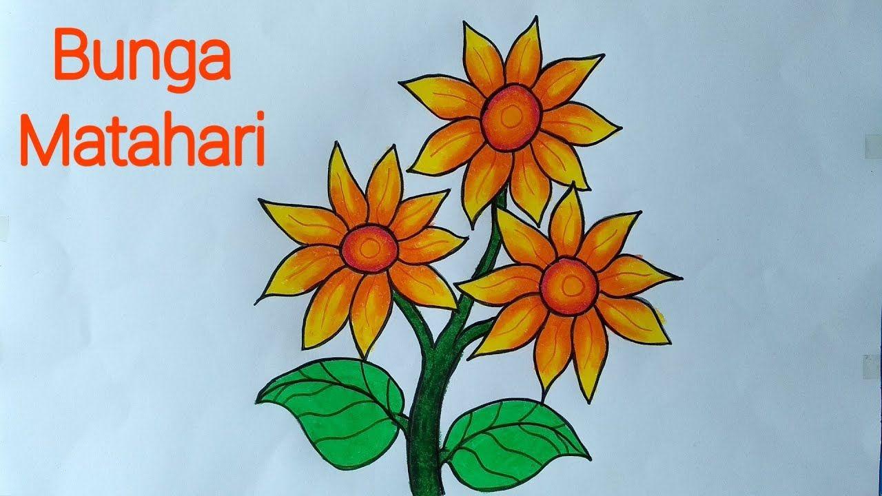 Gambar Biji Bunga Matahari Dari Koleksi Gambar Bunga Matahari Yang Cantik Menggambar Bunga Matahari Bunga Biji Bunga Matahari