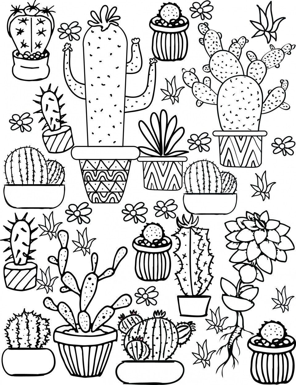 Pin On Kaktus