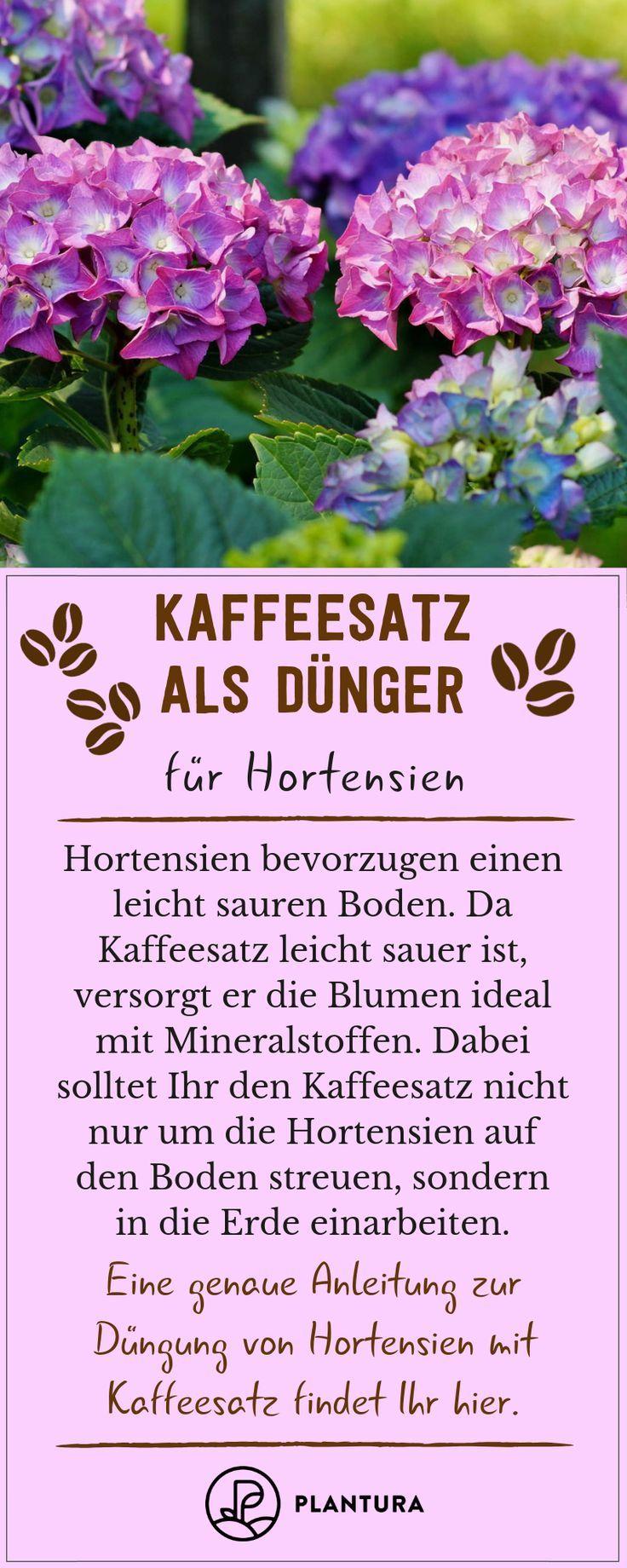 Kaffeesatz als Dünger: Verwendung & Vorteile - Plantura