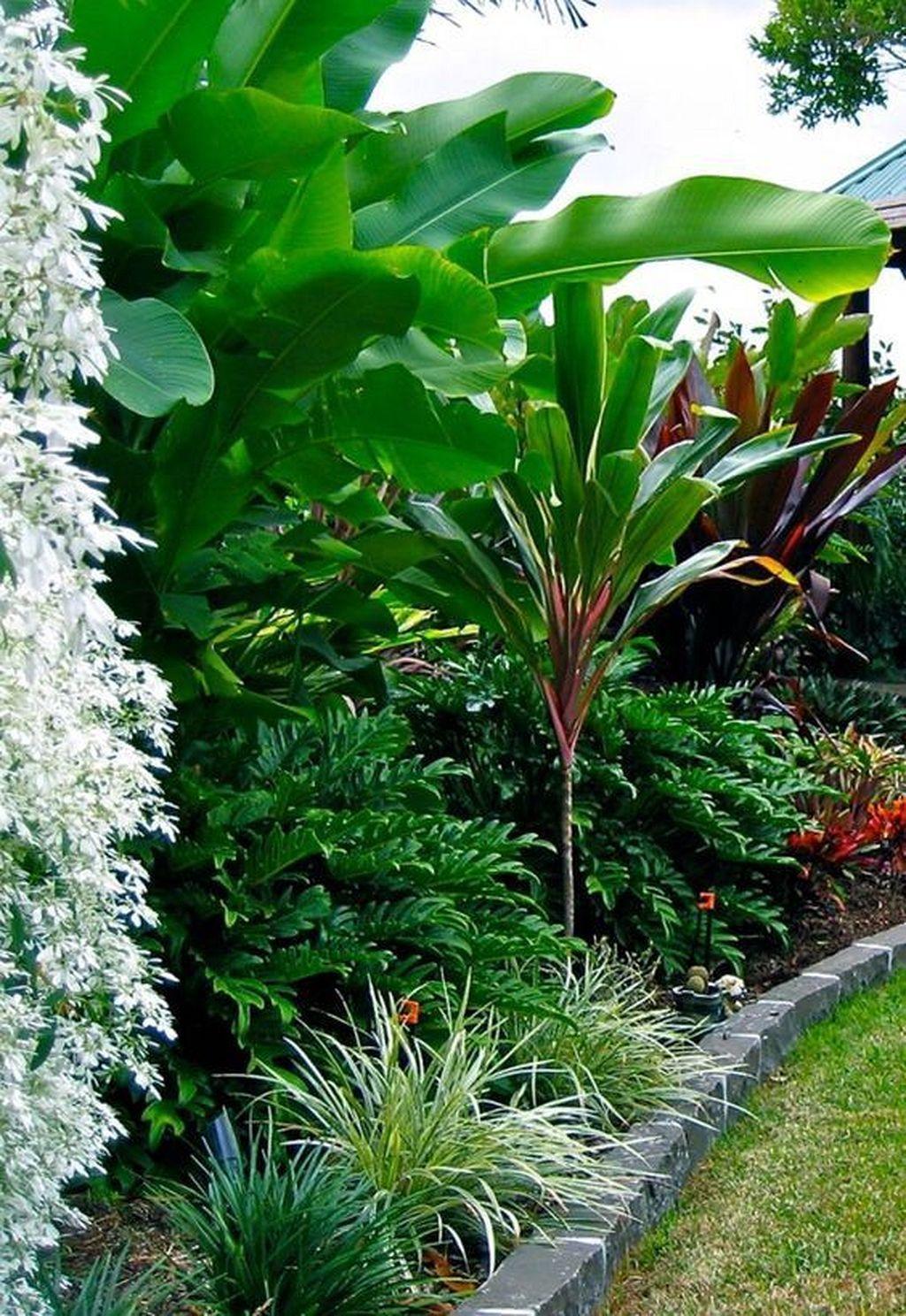 Lush Green Tropical Not Sure If Suits Our Climate And Full Sun Balinese Garden Tropical Garden Design Tropical Backyard