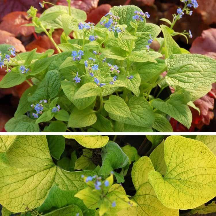7 vivaces précoces, à planter en octobre | Bricolage de ...