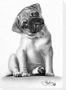 Gorgeous Pug Sketch Dog Sketch Pug Art Dog Art