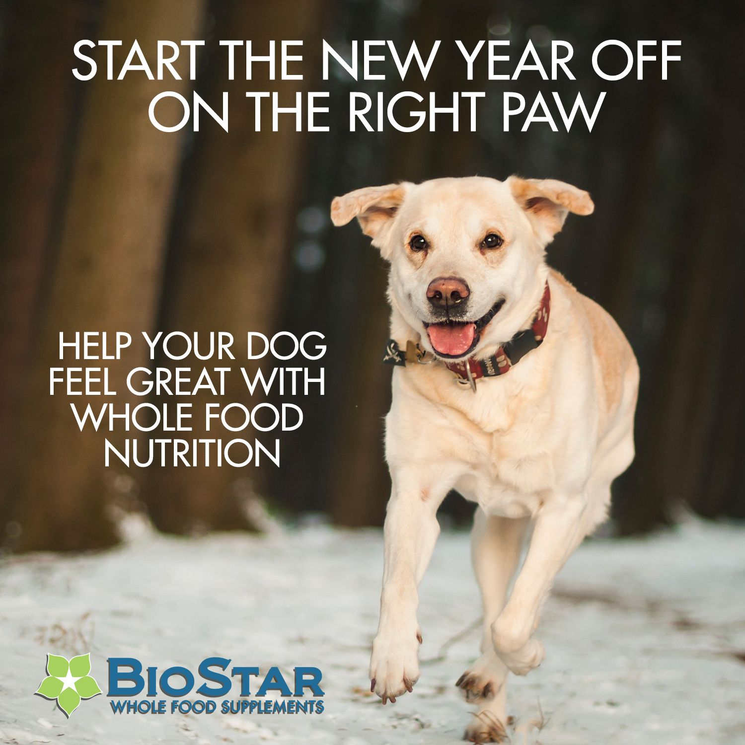 Whole food supplements for your dog. Dogs, Your dog