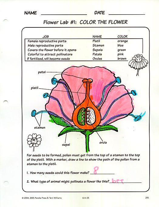 20110926flowerparts001 Botany Teaching science
