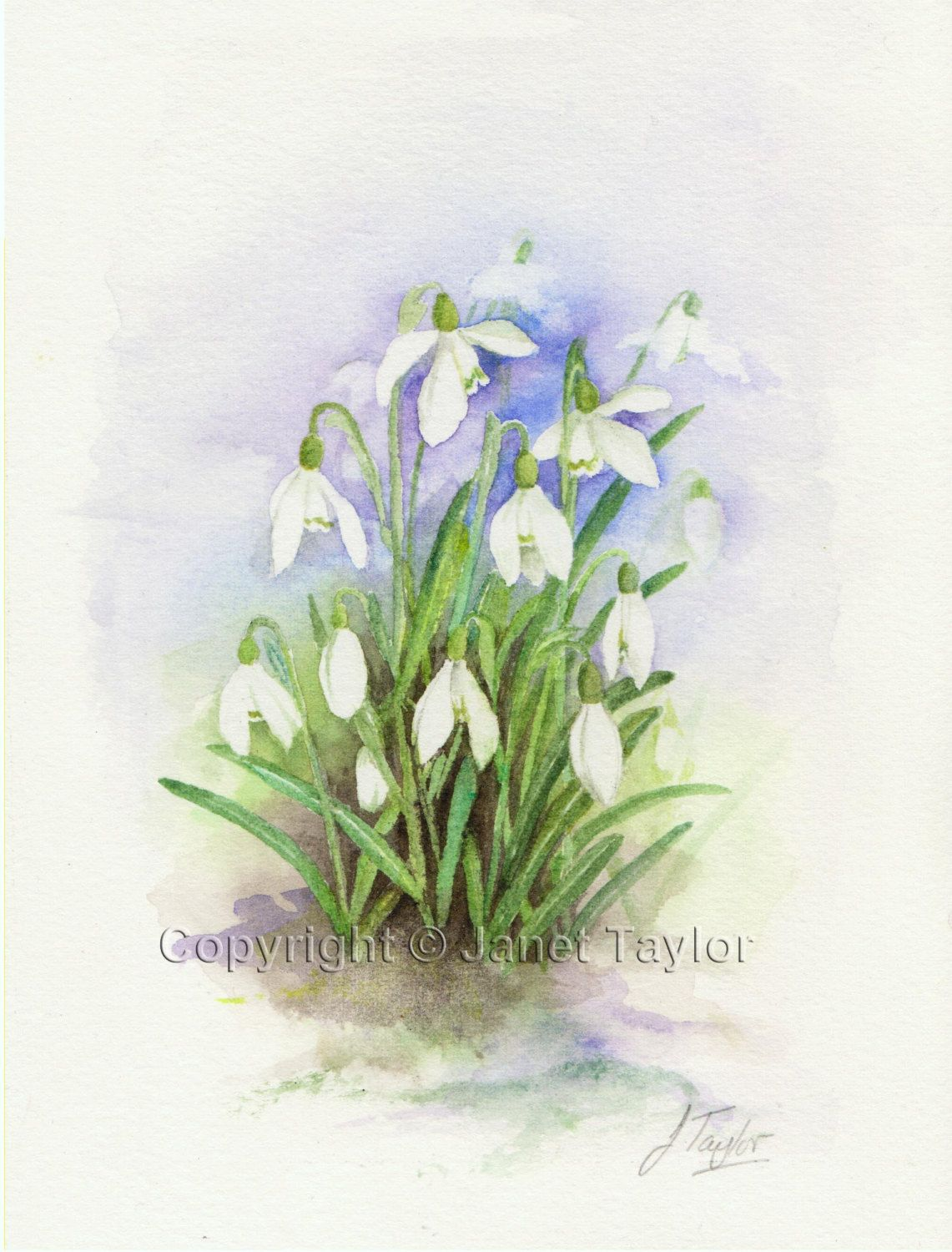 Snowdrops Watercolour Painting By Jan Taylor Original Watercolor