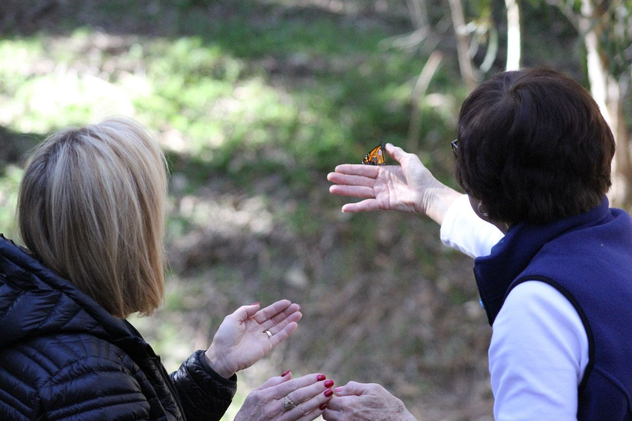 Docent releases butterfly - Photo credit: Valerie Kushnerov
