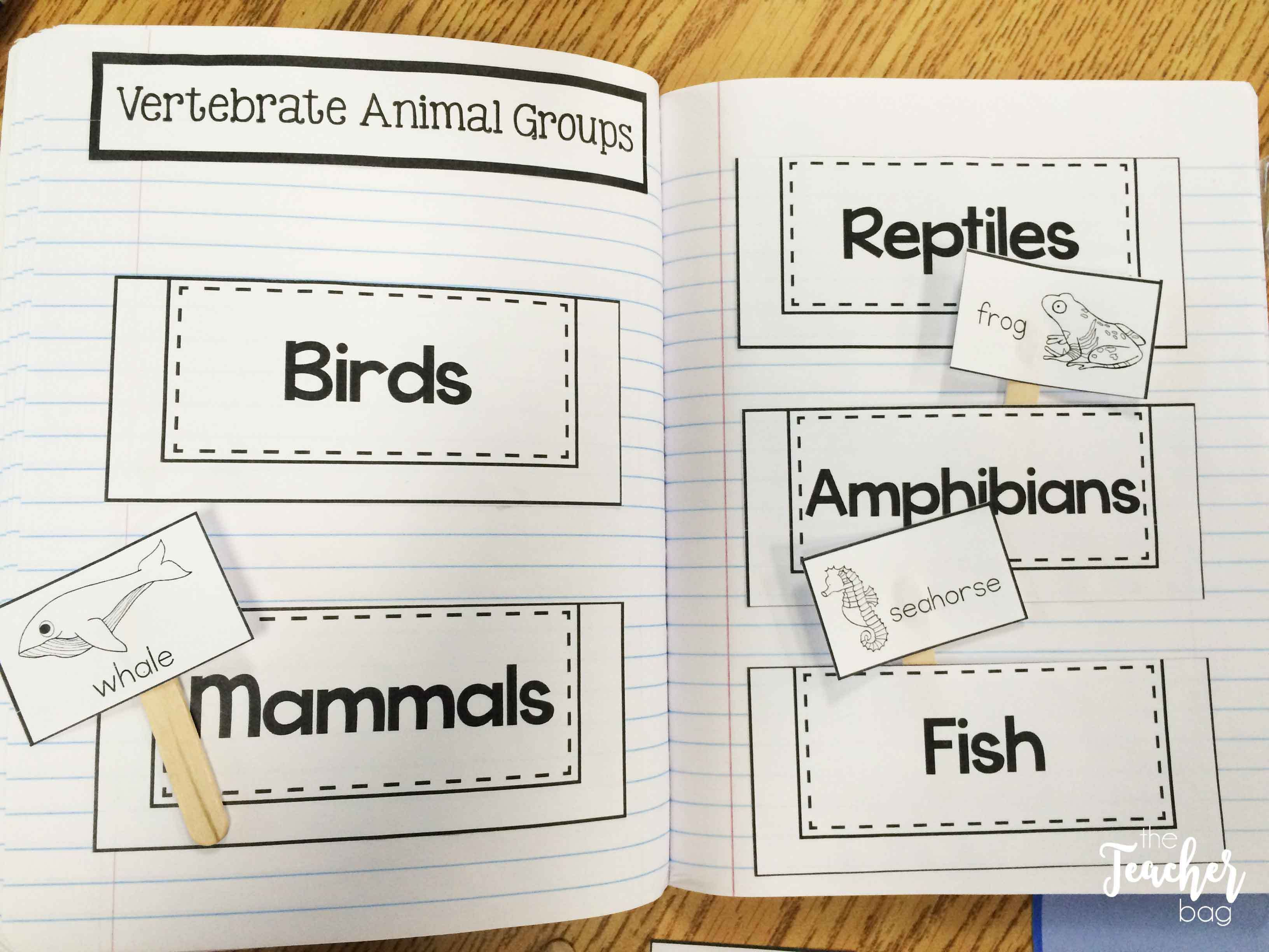 hight resolution of Animal Classification   Animal classification