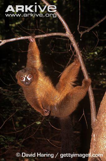 Leave Me Alone | Sonya Bear (Madagascar) | Tank Top | SKREENED