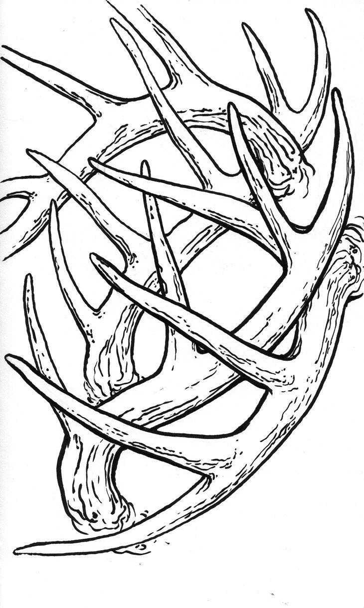 Displaying 19> Images For - Deer Antler Drawings ...