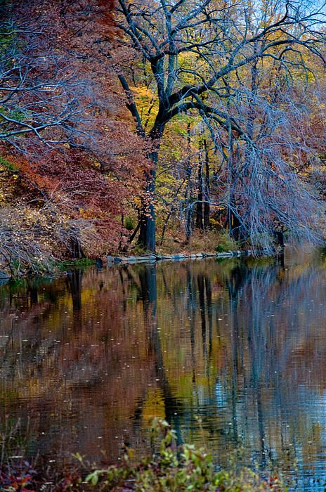 NYC. Manhattan. Autumn Reflection in Central Park