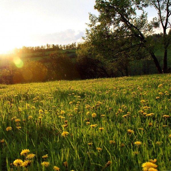 Spring Meadow Easter Wallpaper Facebook Cover Fb Cover Photos
