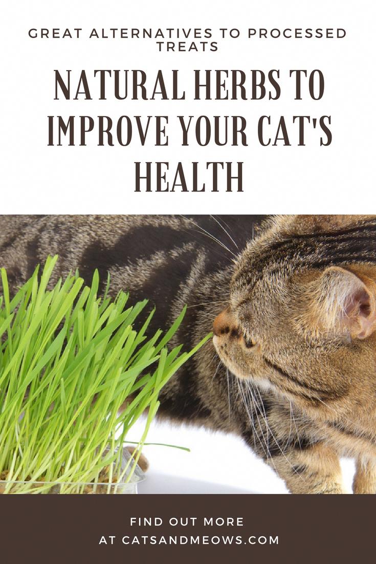 Natural cat health
