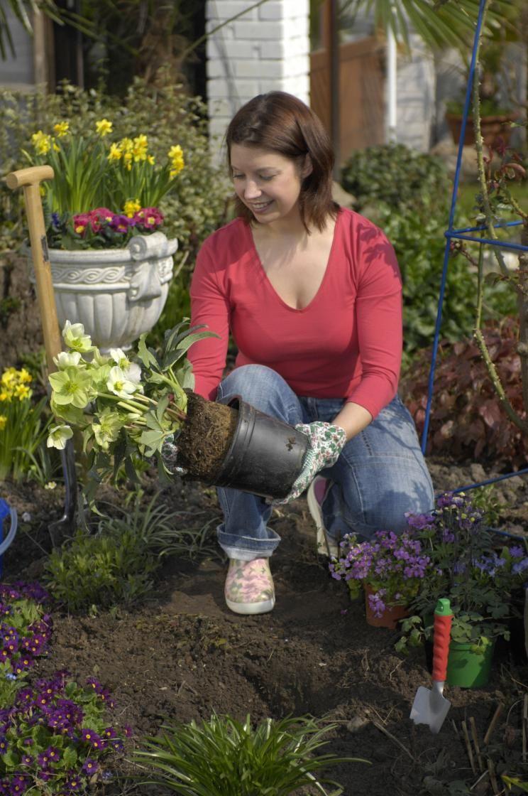 10 Tipps für prächtige Christrosen #orchideenpflege