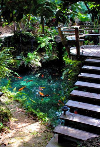Redland Koi Gardens Miami Garden Venues Outdoor